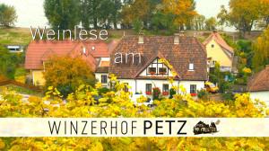 PT-Weinlese-am-Winzerhof